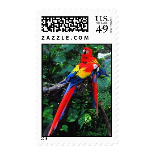 Dos Macaws Envio