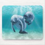 Dos Manatees que nadan Alfombrillas De Ratones