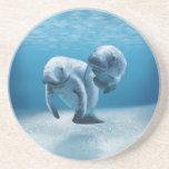 Dos Manatees que nadan Posavasos Personalizados