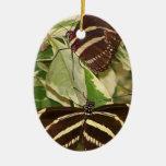 Dos mariposas de la cebra en follaje ornamente de reyes