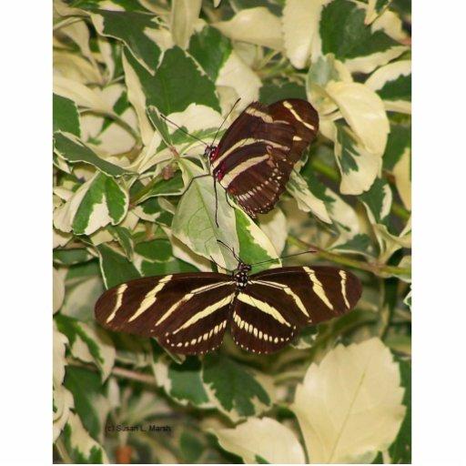 Dos mariposas de la cebra en follaje escultura fotografica