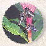 Dos mariposas en la flor rosada posavasos diseño