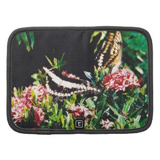 Dos mariposas gigantes de Swallowtail en flores Planificadores