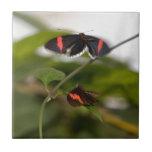 Dos mariposas tejas