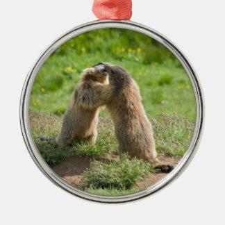 dos marmotas jovenes ornamentos de reyes