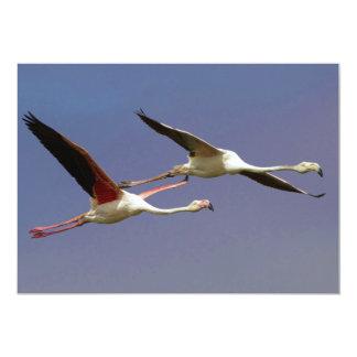 """Dos mayores flamencos que vuelan Phoenicopterus Invitación 5"""" X 7"""""""
