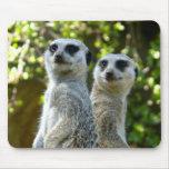 Dos Meerkats Tapete De Ratón