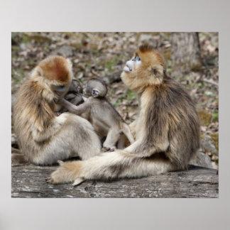 Dos monos de oro femeninos con los recién nacidos posters