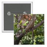 Dos monos en un árbol pin cuadrado