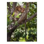 Dos monos en un árbol postal