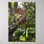 Dos monos en un árbol póster