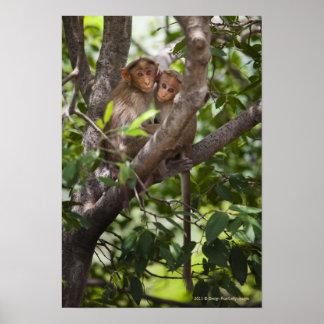 Dos monos en un árbol posters