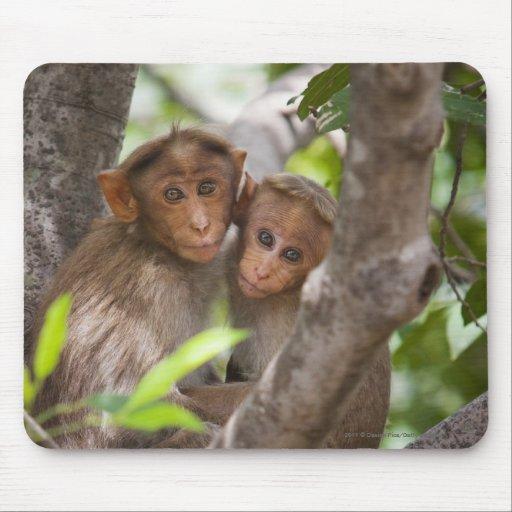 Dos monos en un árbol tapete de ratón