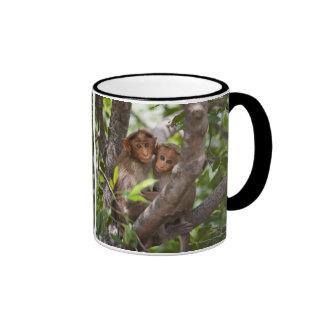 Dos monos en un árbol taza