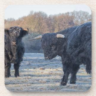 Dos montañeses escoceses negros en prado congelado posavasos de bebidas