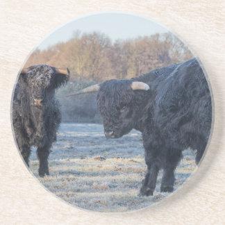 Dos montañeses escoceses negros en prado congelado posavasos manualidades