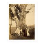 Dos muchachos en la entrada de su casa del árbol,  tarjetas postales