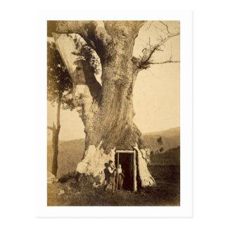 Dos muchachos en la entrada de su casa del árbol, postal