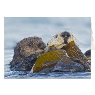 Dos nutrias de mar de California Tarjeta De Felicitación