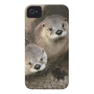 Dos nutrias de río lindas canadensis de Lontra iPhone 4 Case-Mate Carcasa