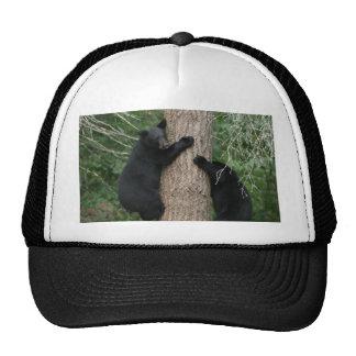dos osos en un árbol gorras