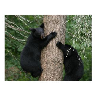 dos osos en un árbol postal