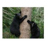 dos osos en un árbol tarjetas postales