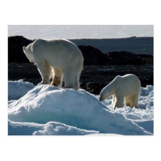 Dos osos polares postales