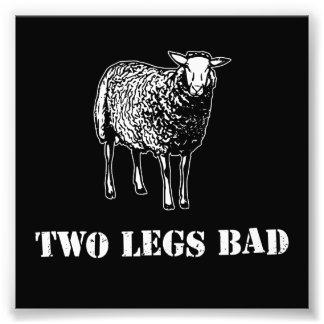 Dos ovejas del malo de las piernas cojinete