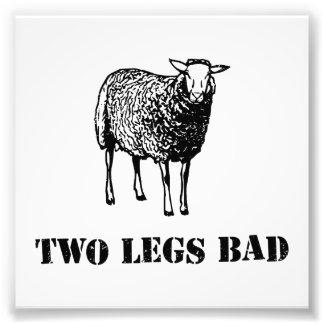 Dos ovejas del malo de las piernas impresión fotográfica