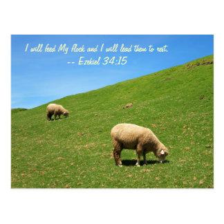 Dos ovejas están pastando pacífico tarjeta postal