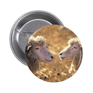 Dos ovejas pin redondo 5 cm