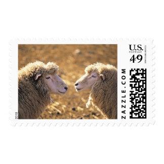 Dos ovejas sellos