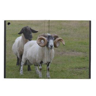 Dos ovejas son mejores de una