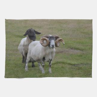 Dos ovejas son mejores de una toalla de cocina