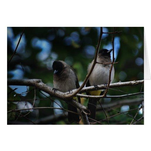 Dos pájaros del bulbul que comparten una rama tarjeta de felicitación