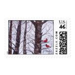 Dos pájaros rojos en invierno