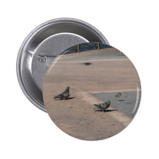 Dos palomas y un botón del gorrión de casa 1 pin
