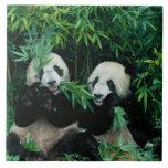 Dos pandas que comen el bambú junto, Wolong, 2 Azulejo Cuadrado Grande