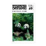 Dos pandas que comen el bambú junto, Wolong, 2 Sello