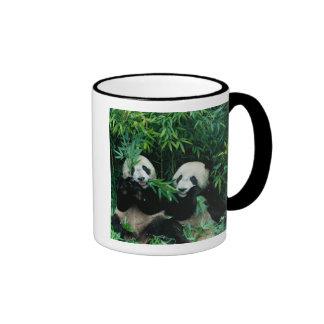 Dos pandas que comen el bambú junto, Wolong, 2 Taza De Dos Colores