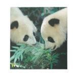 Dos pandas que comen el bambú junto, Wolong, Bloc De Notas
