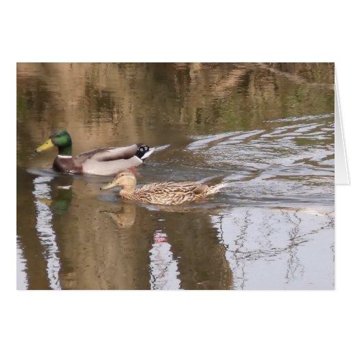 Dos patos en un río tarjeta pequeña