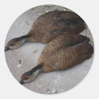 dos patos que mienten completamente de lado pegatinas redondas