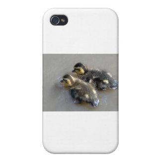 Dos patos silvestres del bebé iPhone 4 protectores