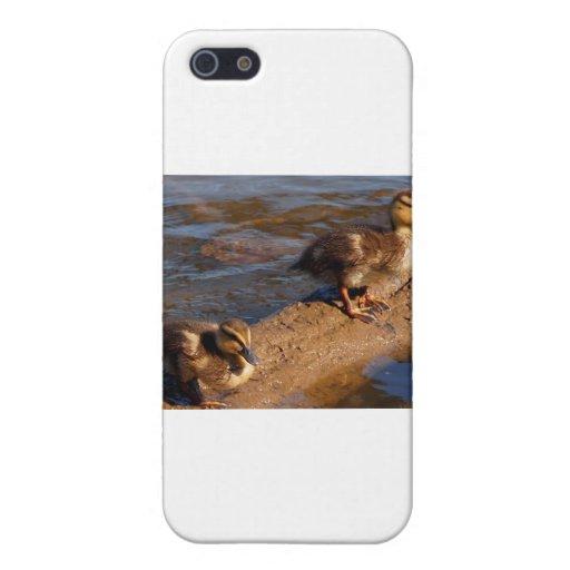 Dos patos silvestres del bebé que cuelgan hacia fu iPhone 5 fundas