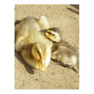 dos pequeños niños de los patos tarjeta postal