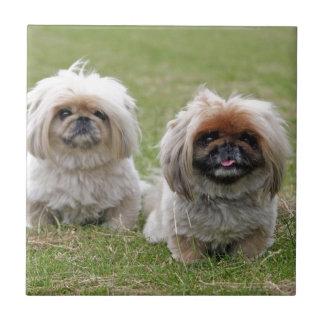 Dos pequeños perritos felices azulejo cerámica
