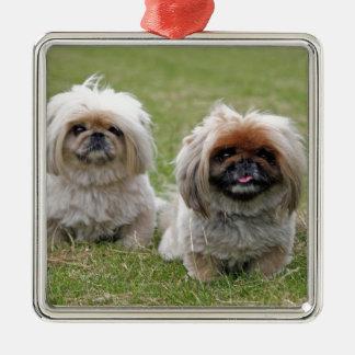 Dos pequeños perritos felices ornaments para arbol de navidad