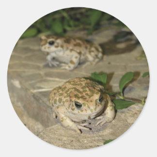 Dos pequeños sapos - impresión de la rana verde pegatinas redondas